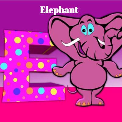 zwierzeta po angielsku słoń