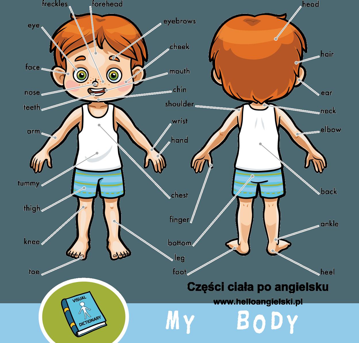 Części ciała po angielsku – Hello Rozmówki Angielskie Online