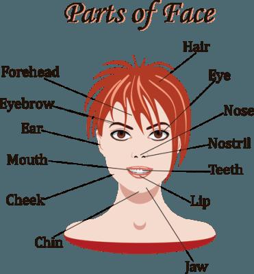 części twarzy po angielsku