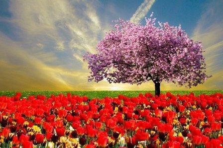 spring ćwiczenie na pory roku po angielsku
